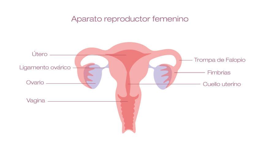 Larga menstruacion