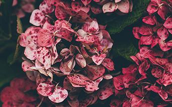 color_sangre_menstrual_rojo_claro